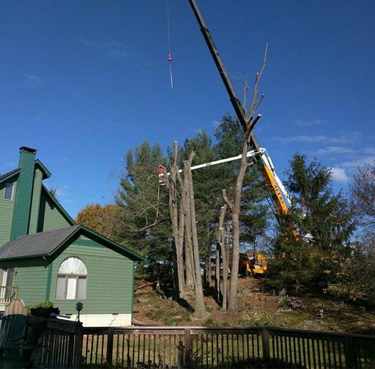 Tree Removal Staunton, VA