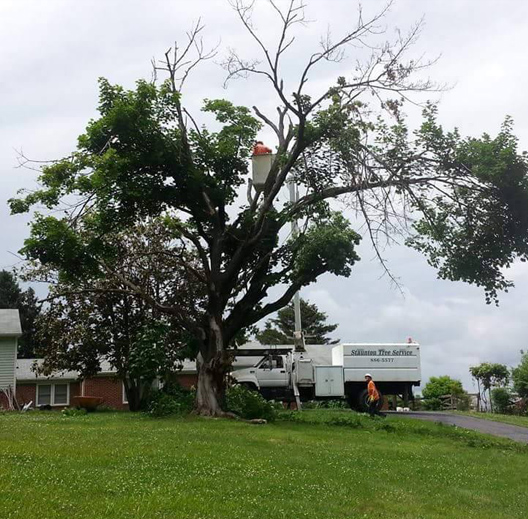 Tree Health Care Staunton, VA