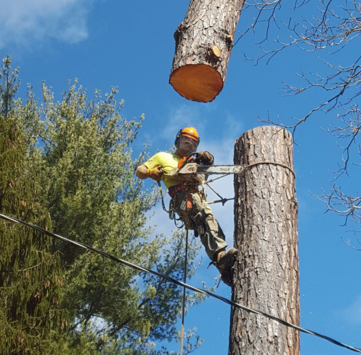 Tree Service Buffalo Gap, VA