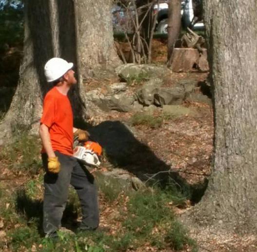 Tree Service Swoope, VA