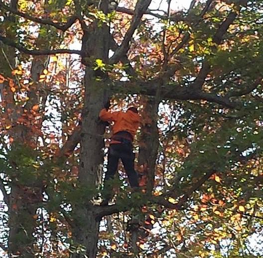 Tree Service Waynesboro, VA