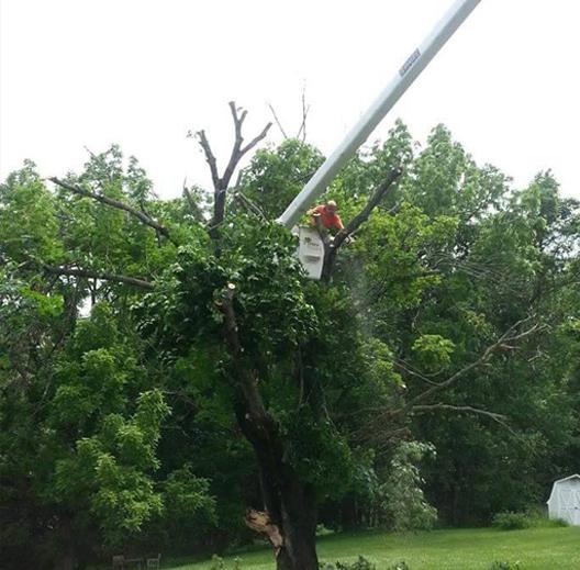 Tree Risk Assessment Staunton, VA