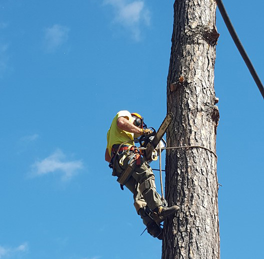 Tree Service Churchville, VA