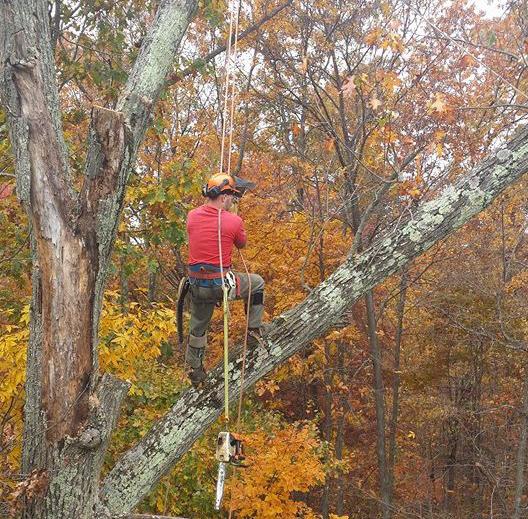 Tree Service Fishersville, VA