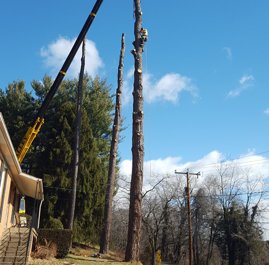 Tree Service Fort Defiance, VA