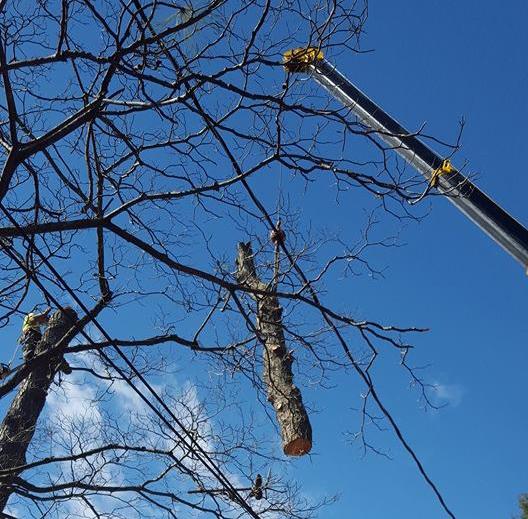 Tree Service Greenville, VA