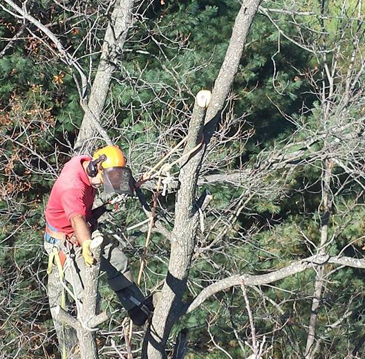 Tree Service New Hope, VA