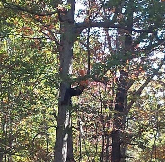 Tree Service Verona, VA