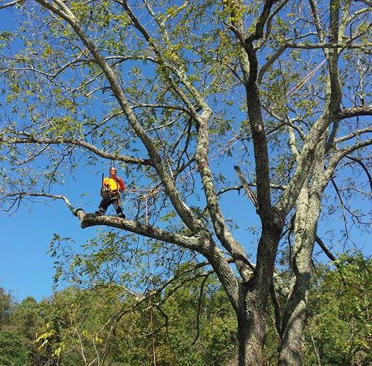 Tree Trimming & Pruning Staunton, VA