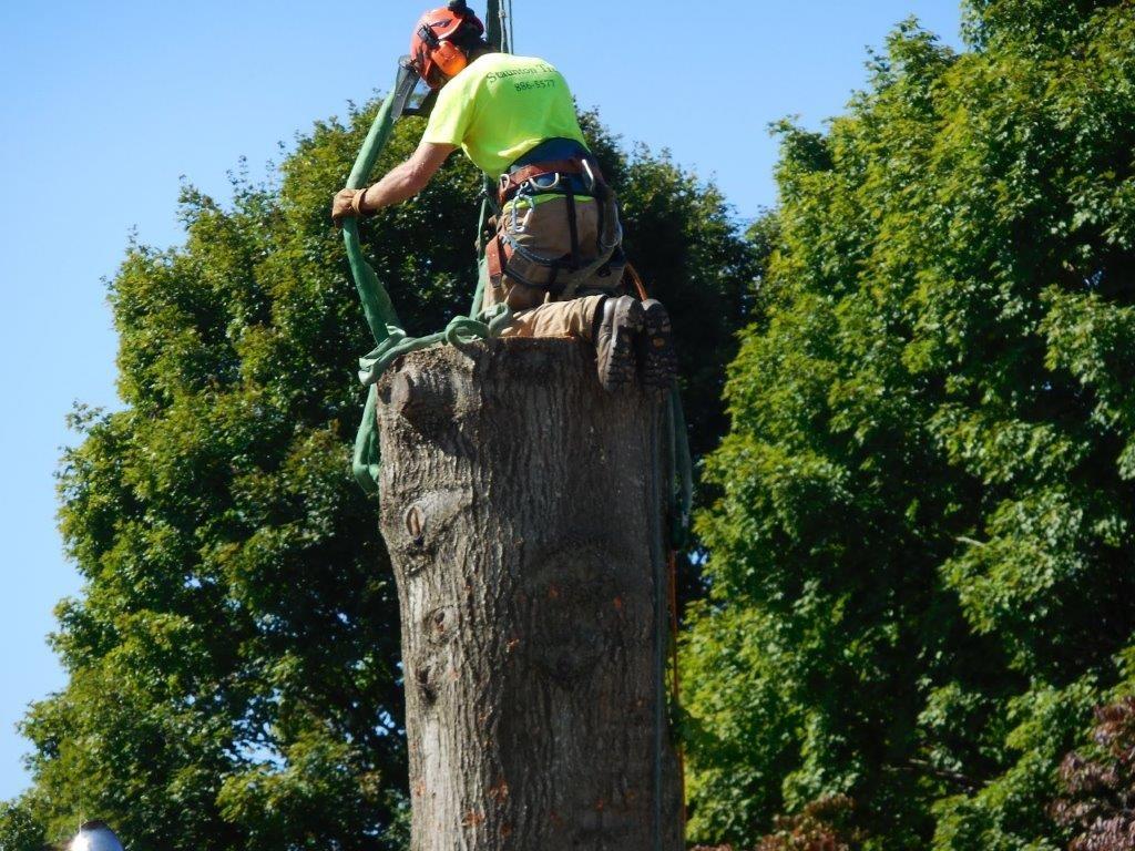 Removing a tree Harrisonburg